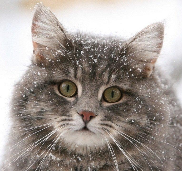 Да-да, власть котикам! #котики - Изображение 1