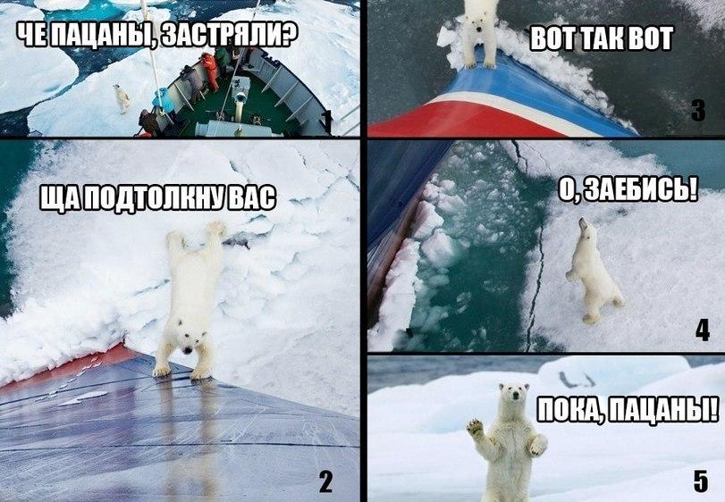 Медведь-стронгмэн - Изображение 1