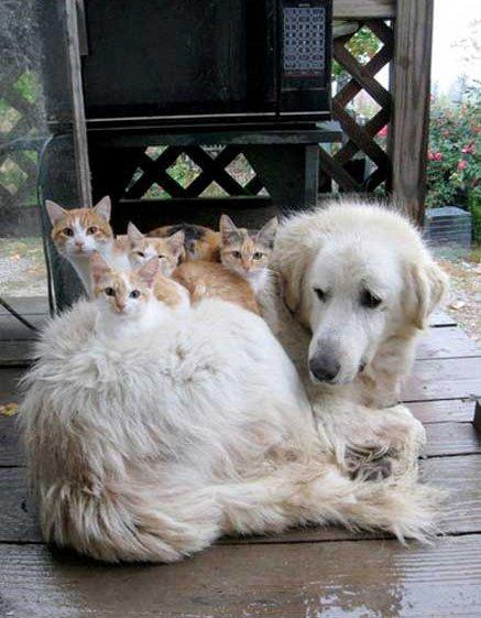 """В смысле """"достали котики""""? - Изображение 1"""