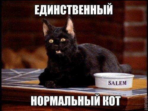 Рас уж сегодня все про котов заговорили то вот. - Изображение 1