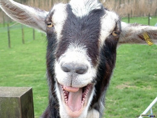 всем козу!!! \m/ - Изображение 1