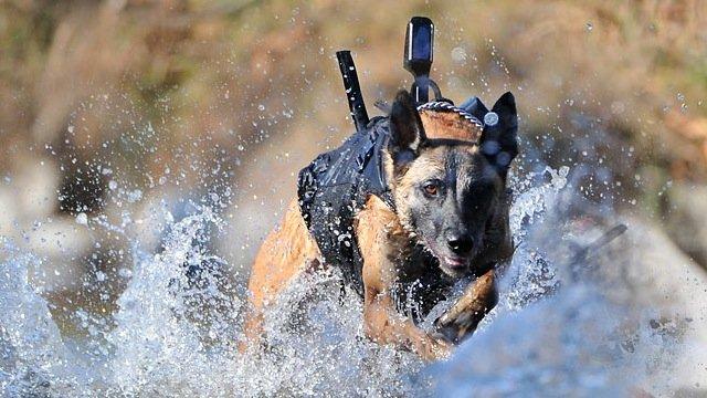 Call of Duty:Ghvost или гавкающий спецназ  После ликвидации Осамы в американской прессе  появилось несколько сообщен ... - Изображение 1