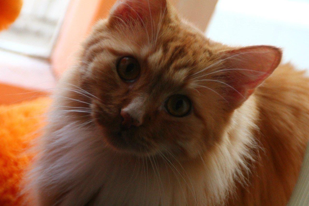 Красавчик.Да я горжусь своим котом,хоть он и не ловит мышет,но такой милый)). - Изображение 1