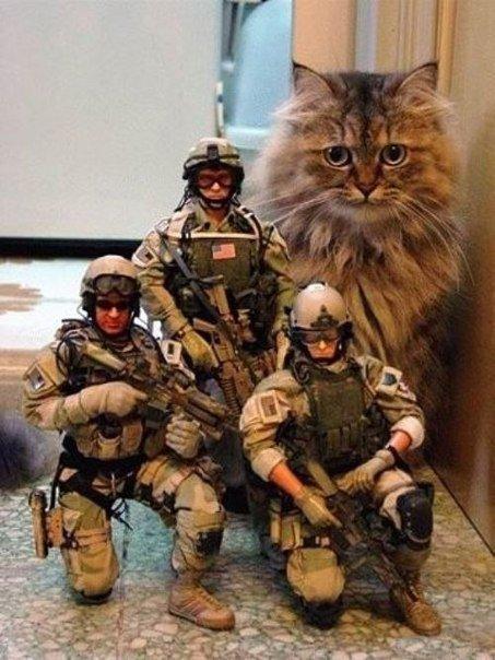 Морские котики #котики - Изображение 1