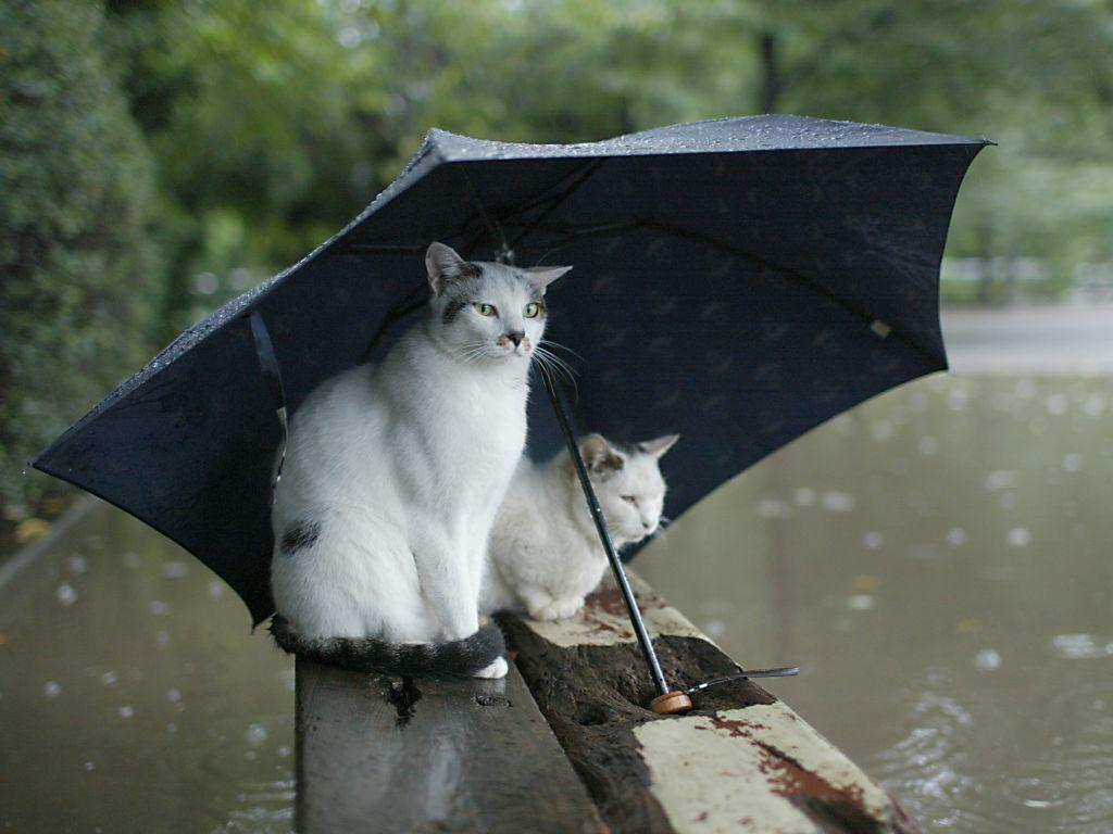 #коты #дождь   - Изображение 1