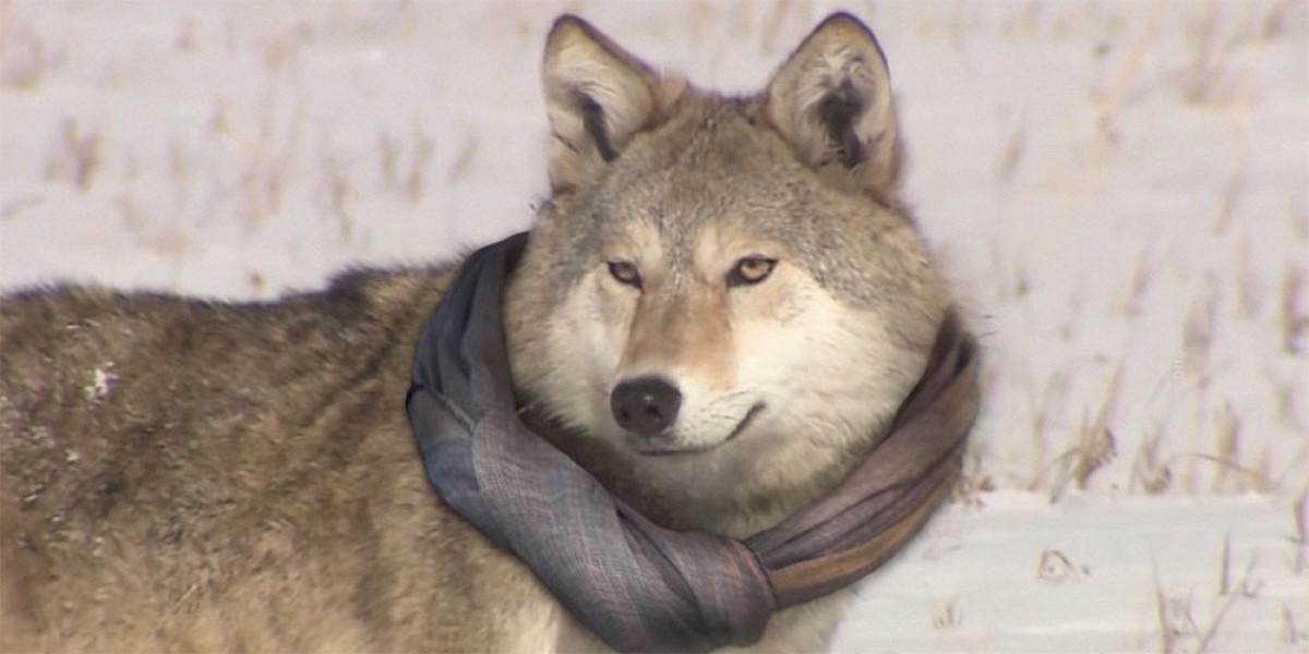 Никита Михалков пересказал мем про волка, который вцирке невыступает