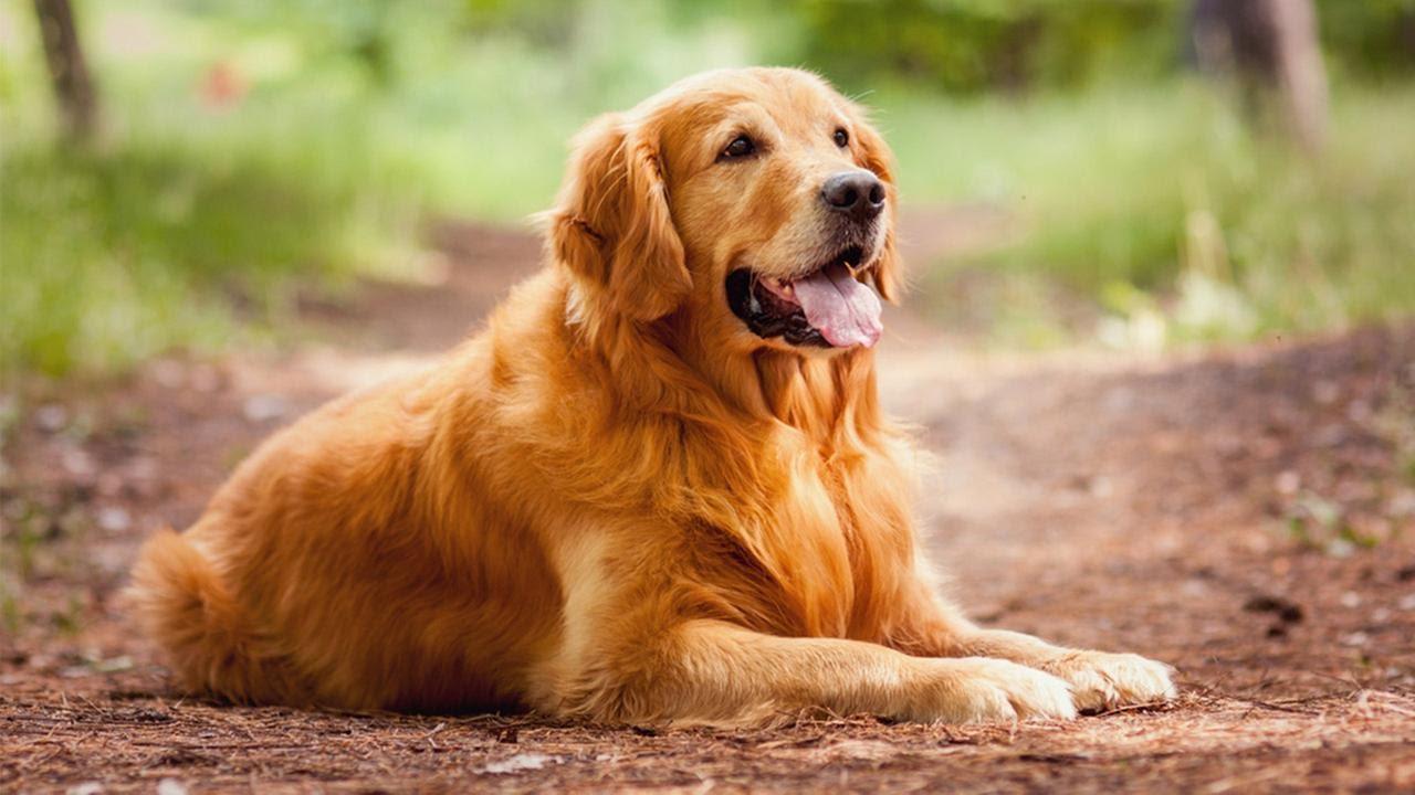 Instagram-аккаунты животных (особенно собак) стали популярнее вовремя карантина