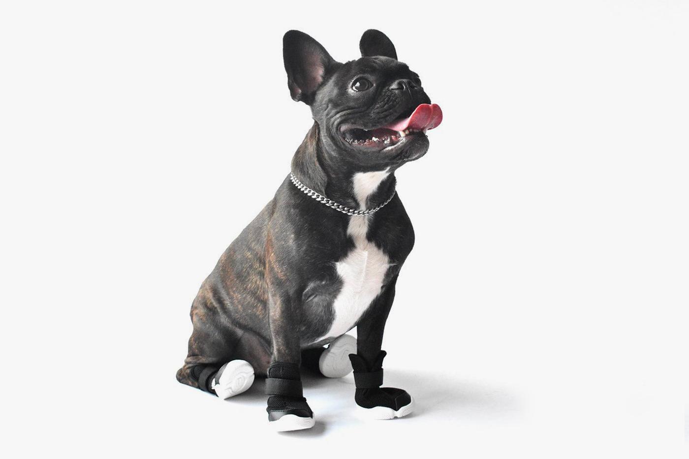 В продаже появились дизайнерские кроссовки для собак