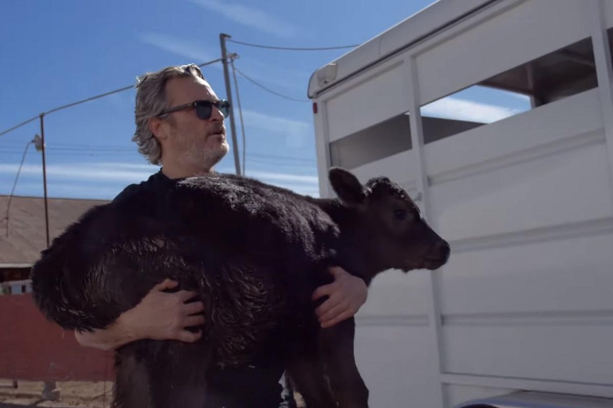 Хоакин Феникс спас корову ителенка соскотобойни после «Оскара»