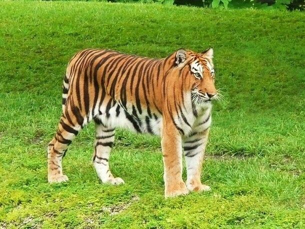 Отслона дожирафа: художник показал, как животные выглядят безшеи. Это смешно