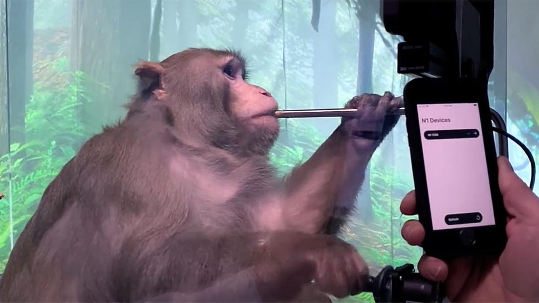 Neuralink вживила обезьяне чип — она управляет игрой «силой мысли», как и обещал Маск