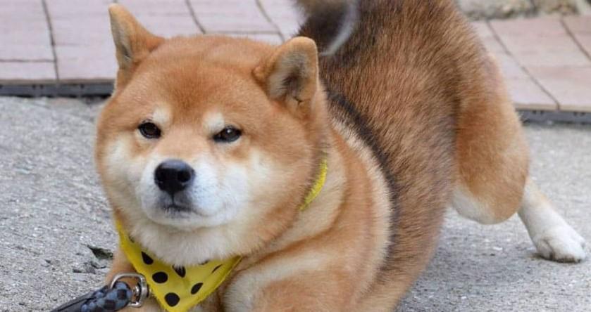 ВРоссии треть ресторанов считают себя dog-friendly