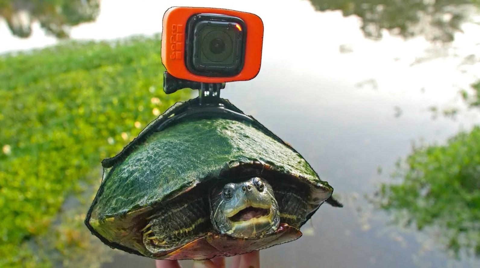 Блогер снял самое расслабляющее видео. Для этого понадобились черепаха иGoPro