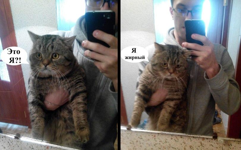 Смотреться в зеркало - не всегда приятно...  . - Изображение 1