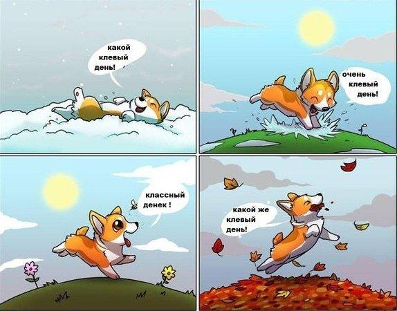 Ужасно хочу собаку :(  . - Изображение 1