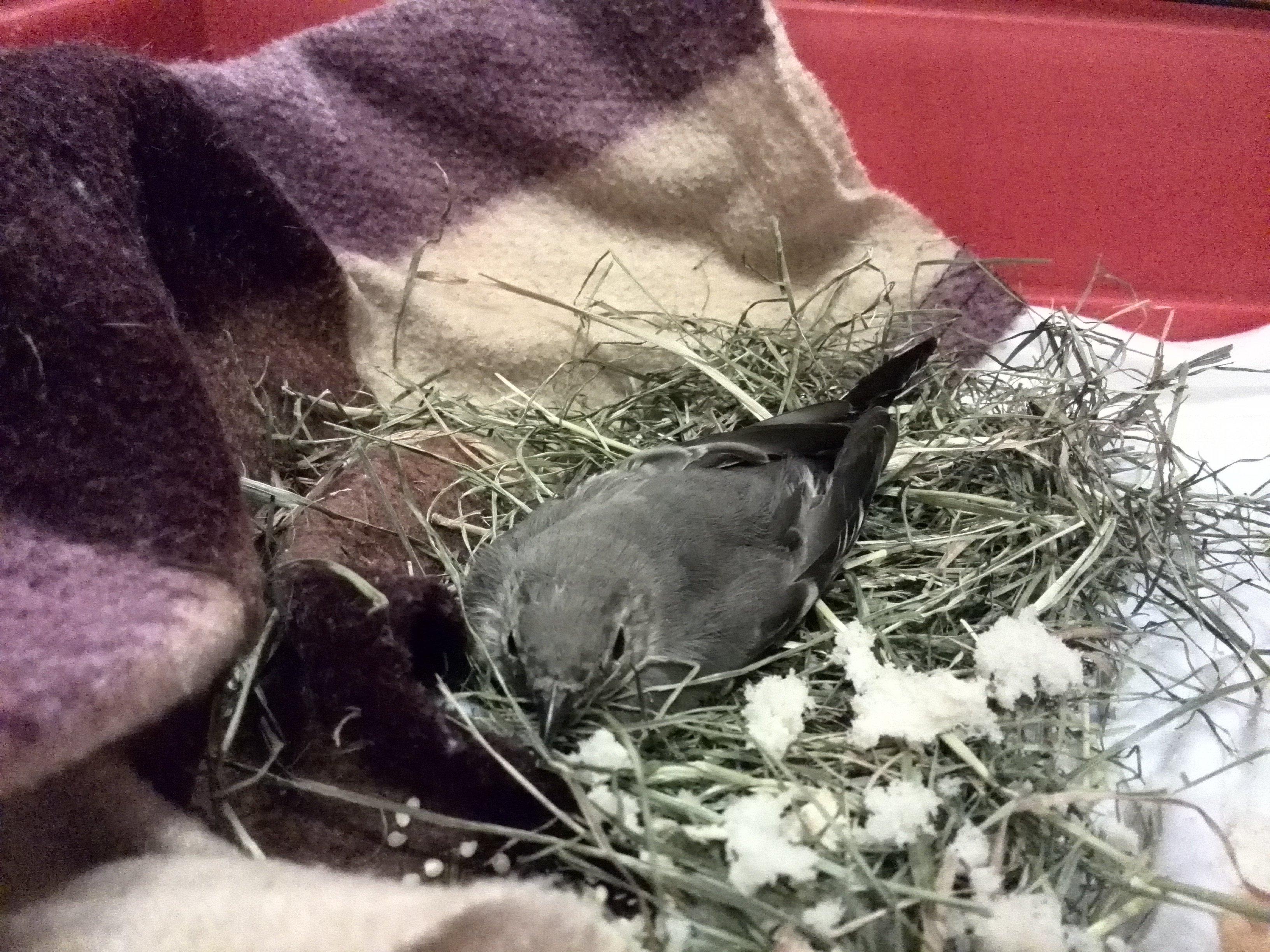 Рассказ о спасение птицы  . - Изображение 1