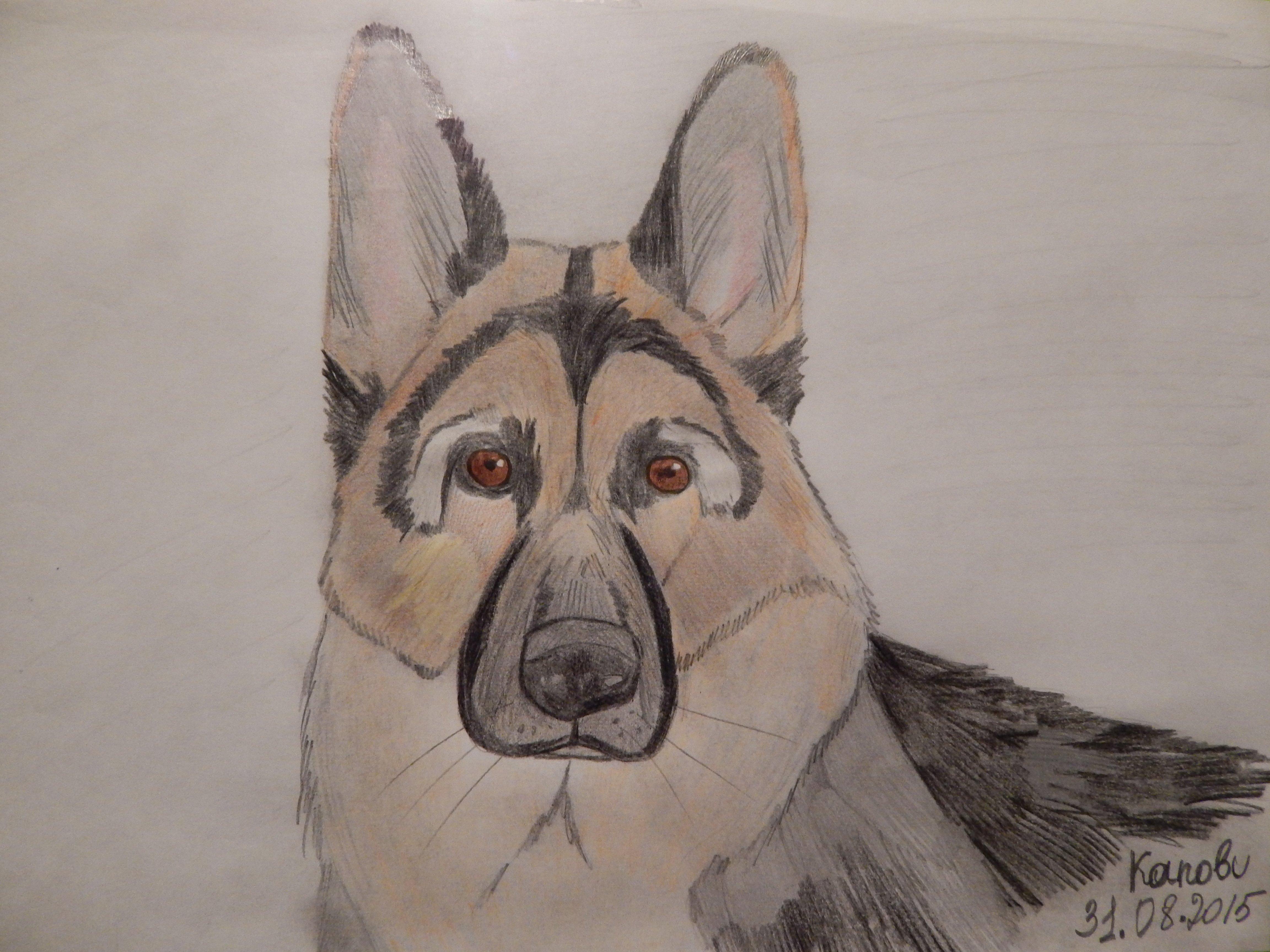 #ярисую  Собака из Fallout 4. - Изображение 1