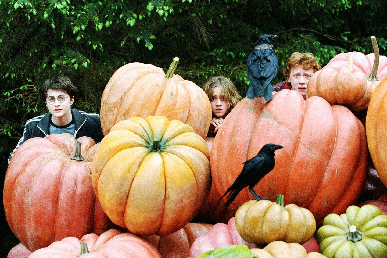 Гарри Поттер и Хеллоуин . - Изображение 3