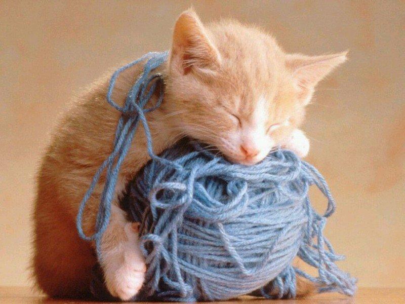 #Sleepy_cat #котики #Котята #Спящие_котята. - Изображение 1