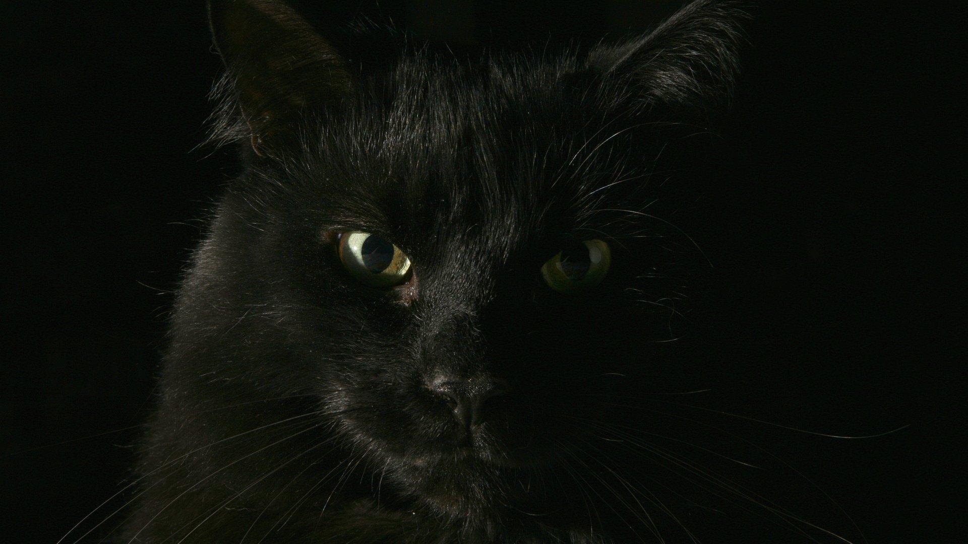 Не верь котам. - Изображение 1