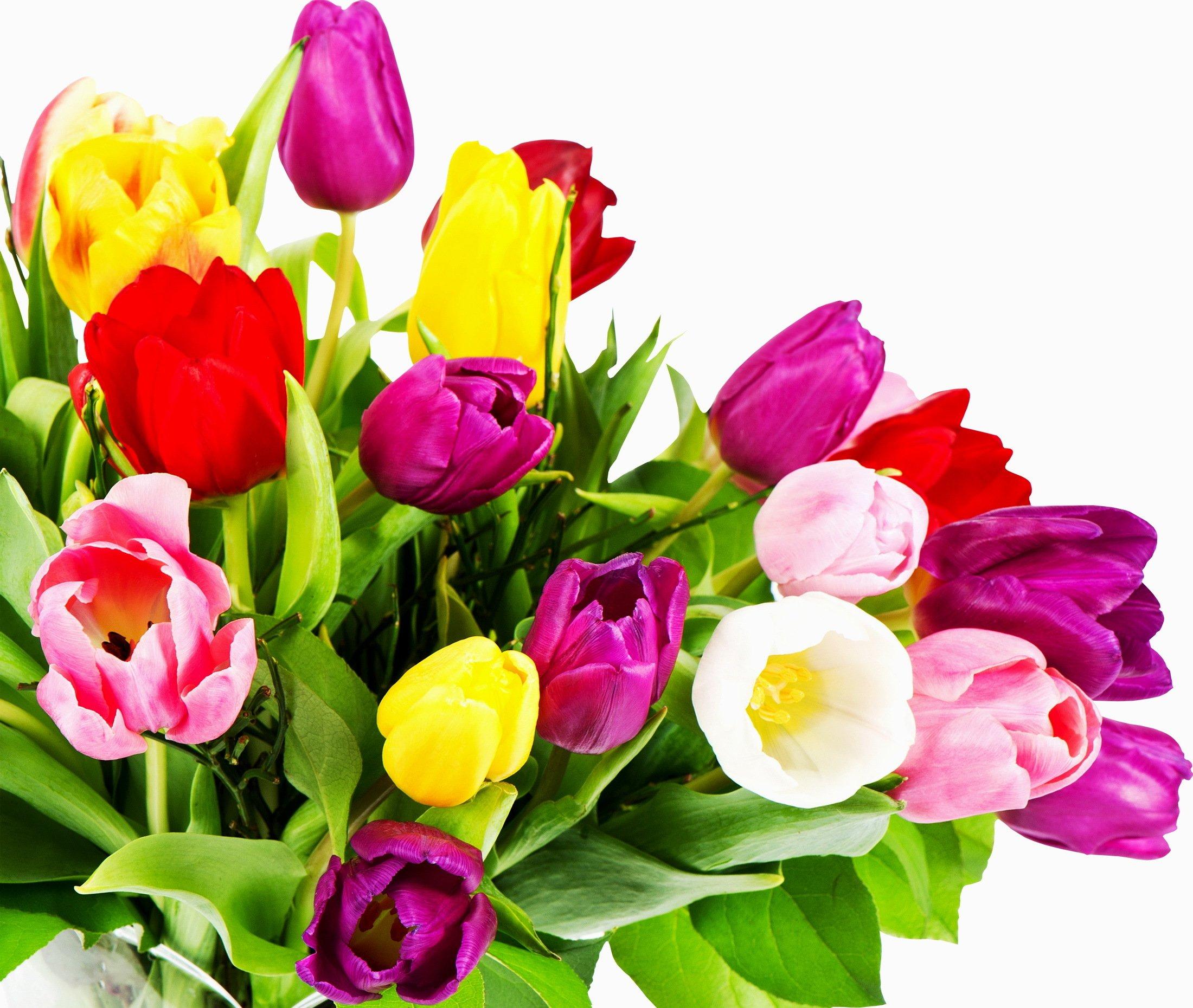 Всех девушек с Канобу, с 8 марта! Счастья Вам, удачи, море улыбок , позитива и любви!). - Изображение 1